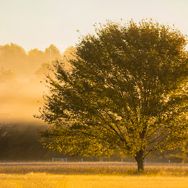 Fall Fog by Deborah Felmey - Landscapes Weather ( tree, color, fog, fall, landscape )