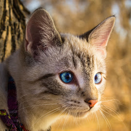 Watch It by Julie Wooden - Animals - Cats Kittens ( kitten, cat, north dakota, hebron, portrait, sam, nature, autumn, fall, outdoors, scenery, feline, enviromental portrait, animal )