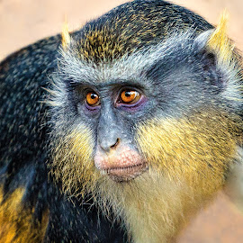 by Judy Rosanno - Animals Other Mammals ( san antonio zoo, november 2017,  )