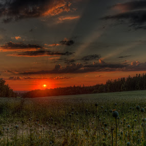 Sunset with poppy by Klaus Müller - Landscapes Sunsets & Sunrises ( clouds, nature, sunsets, sunset, horizon, poppy, evening,  )