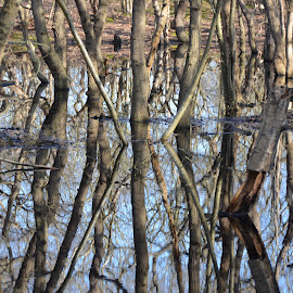 Reflections by Kris Van den Bossche - Nature Up Close Other plants