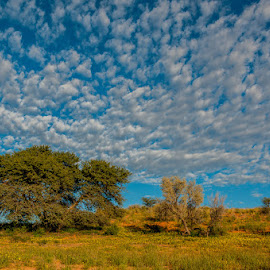 Altocumulus Clouds by Johan Jooste Snr - Landscapes Weather ( clouds, south africa, trees, kgalagadi, landscape, altocumulus clouds )
