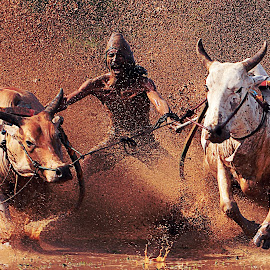 PACU JAWI by Yenny Narny - Sports & Fitness Rodeo/Bull Riding