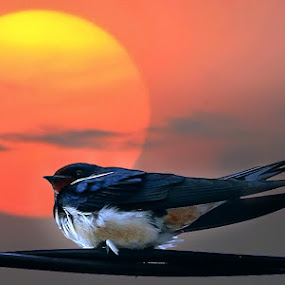 rest area by Gesit Pinanjaya - Animals Birds