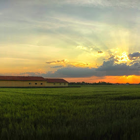 Amber Waves of Grain by Onur Köksal - Landscapes Prairies, Meadows & Fields