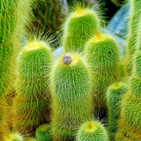 Cactus by Naveen Naidu - Nature Up Close Other plants