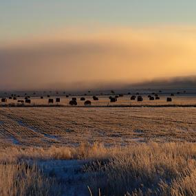 Frigid Sunrise by Diana Treglown - Landscapes Prairies, Meadows & Fields
