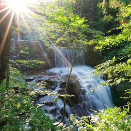 Sun Waterfall by Svemir Brkic - Landscapes Waterscapes ( forest, leaves, waterfall, sun, smooth,  )