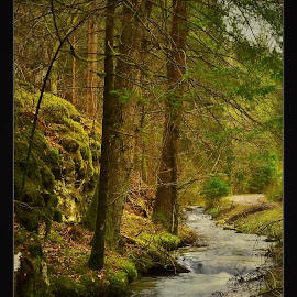 wild  by Jojo Pried-Horsky - Landscapes Forests ( wild, nature, green, forest, pružina )
