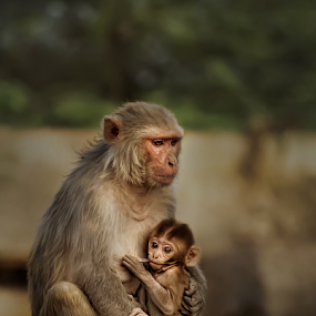 Mother & child  by Kallol Bhattacharjee - Animals Other Mammals ( love, sweet, baby, cute, nikon, light,  )