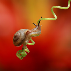 my spiral way by Bayu Sanjaya - Animals Other