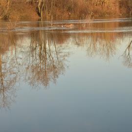 by Drago Ilisinovic - Nature Up Close Water