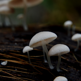 Mushroom by Ferrys Effendi - Abstract Macro ( abstract, macro, outdoor, plants )