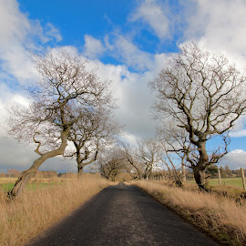 The dividing road by Damien Brearley - Landscapes Prairies, Meadows & Fields ( countryside, wide angle, trees, road, landscape,  )