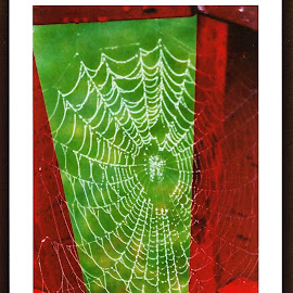 Web fantastic by Sharon Leora Norris - Nature Up Close Webs