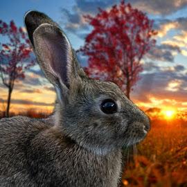 Sunset Bunny by Sarah Sullivan - Digital Art Animals