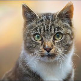 cat by Jana Vondráčková - Animals - Cats Portraits