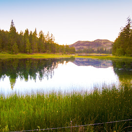 lake in the woods by Lena Block - Landscapes Forests ( mountain, grass, serene, lake, woods )