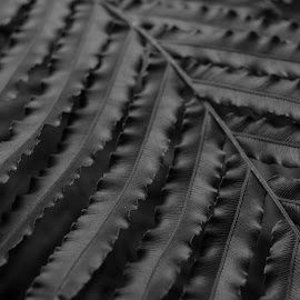 Black Fern by Karina Zawilinski - Nature Up Close Other plants ( fern, leaves, closeup, texture, black and white )