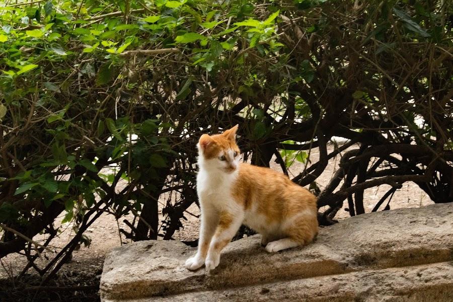 Posture by Meeta Thakur - Animals - Cats Portraits ( cat, animal, sitting )