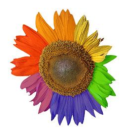 Rainbow Sunflower by Elizabeth Kirian - Digital Art Things ( #sunflower #rainbow #lgbt #gay #lesbian #pride )
