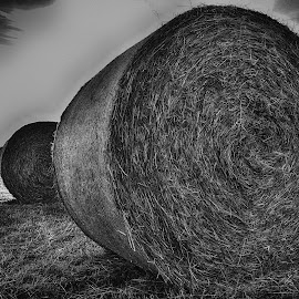 Hay Bales On The Field by Marco Bertamé - Black & White Landscapes ( hay bale )