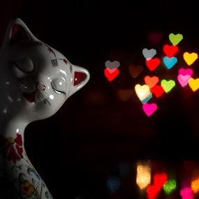 lovely cat.. :) by Samet Işık - Public Holidays Christmas ( love, cat, bokeh filter, christmas, bokeh )