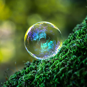 Fluctuate Reflections by Christian Rasmussen - Nature Up Close Water ( soap bubble, woods )