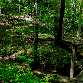 IntoThe Woods by Kenneth Rogers - Landscapes Forests