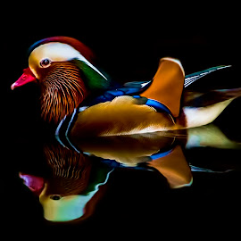 Wood Duck reflection by Lisa Coletto - Animals Birds ( bird, reflection, wood duck, duck, wader,  )