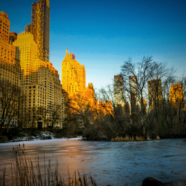 Central Park by Joseph Law - City,  Street & Park  Skylines ( skyline, morning glory, trees, reflections, new york, frozen, central park, pond )