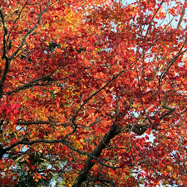 FALL by Gary Colwell - Nature Up Close Trees & Bushes ( tree, colors, fall )