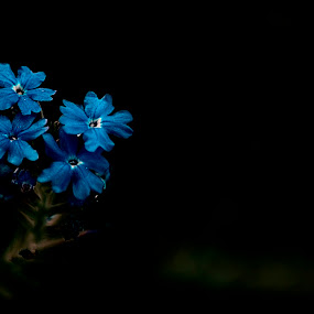 by Shikhar Srivastava - Nature Up Close Flowers - 2011-2013