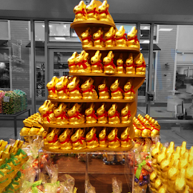 Lindt Easter Chocolate Bunny Display by Cheryl Beaudoin - Food & Drink Candy & Dessert ( chocolate, easter, bunny, lindt, display, bunnies )