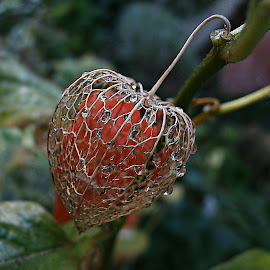 Nature's Filigree by Marija Jilek - Nature Up Close Other plants