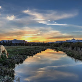 Peace by Casey Mitchell - Animals Horses ( clouds, mountains, stream, dawn, sunset, horse )