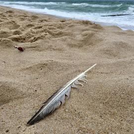 Feder am Strand by Marianne Fischer - Nature Up Close Sand