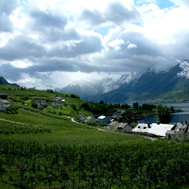 A Life in the Fjords by Mikki W - Landscapes Prairies, Meadows & Fields ( village, fruit trees, cloud, fjord, norway, fields )