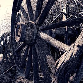 Wheel  by Todd Reynolds - Digital Art Things