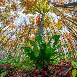 Autumn rhapsody by Stanislav Horacek - Nature Up Close Trees & Bushes