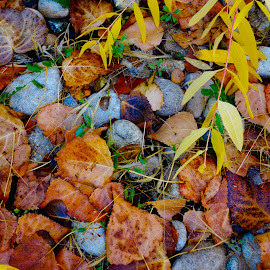 AUTUMN LEAVES AT THE LAKE by Gerry Slabaugh - Nature Up Close Leaves & Grasses ( idaho, lakelowell, nature, autumn, fall, lake, leaves )