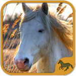 Horse Puzzles Collection Icon
