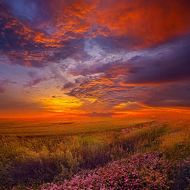A Simple Purpose by Phil Koch - Landscapes Prairies, Meadows & Fields ( vertical, arts, travel, yellow, love, sky, nature, shadow, weather, flowers, light, trending, colors, twilight, art, mood, horizon, journey, forest, rural, portrait, country, dawn, environment, season, serene, popular, outdoors, lines, natural, inspirational, hope, canon, wisconsin, joy, landscape, sun, photography, life, emotions, dramatic, horizons, inspired, clouds, office, heaven, green, camera, beautiful, scenic, living, morning, woods, shadows, field, fineart, unity, blue, sunset, peace, meadow, sunrise, earth )