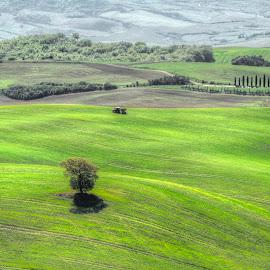Tuscany by Fernando Ale - Landscapes Prairies, Meadows & Fields