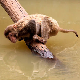 search in the water by Niraj Jha - Animals Other Mammals