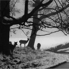 Deer Santa.................. by Fred Starkey - City,  Street & Park  Vistas