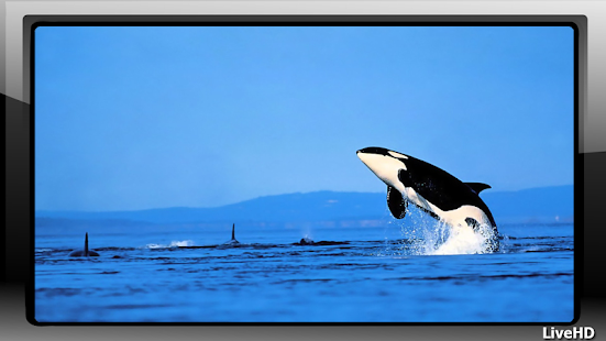 Orca Wallpaper - screenshot