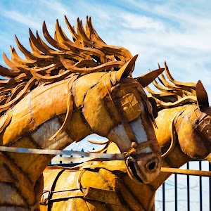 Tin Horses.jpg