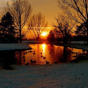 Winter Color by Dennis Robertson - Landscapes Sunsets & Sunrises ( water, sunset, ducks, silhouette, , relax, tranquil, relaxing, tranquility )
