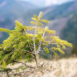 by Marek Kolarik - Nature Up Close Trees & Bushes ( tiny, tree, dof, skalka )
